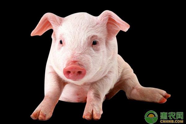 今日生猪价格多少钱一斤?2019全国生猪价格行情分析