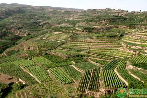 农村土地承包政策