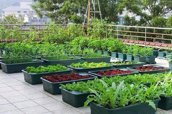 新手如何打造阳台小菜园?这五个技巧分享给你!