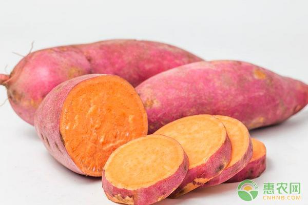 今日红薯多少钱一斤?