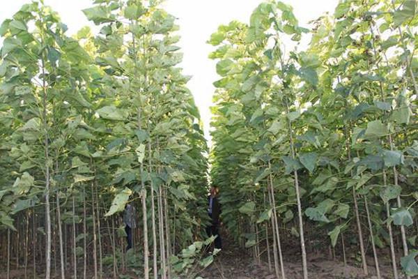 2019年农村种什么药材、苗木有补贴?每亩补贴多少钱?