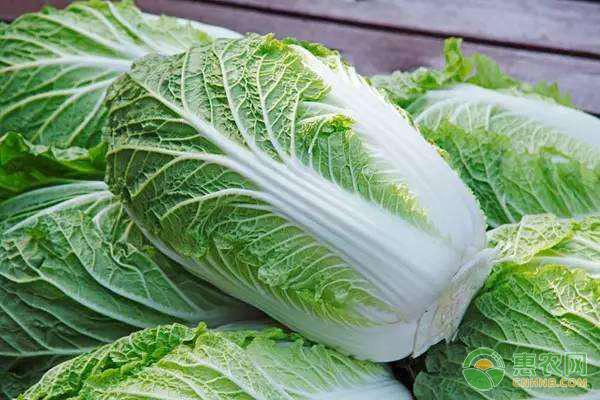 亚博-白菜多少钱一斤?2019年3月4日最新白菜主产地价格行情
