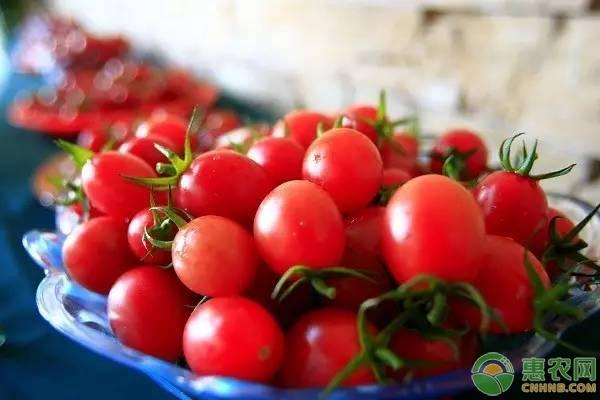 亚博-圣女果多少钱一斤?2019年3月4日圣女果产区价格行情