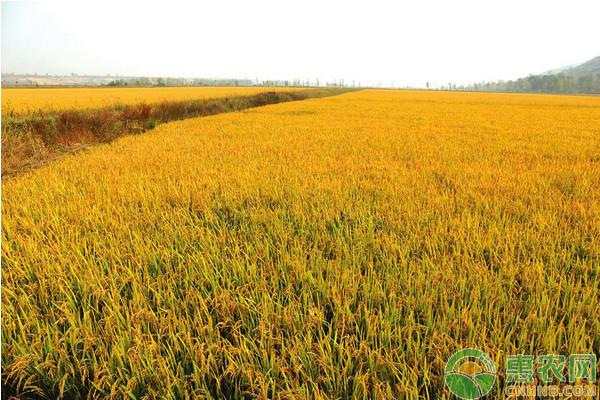 农民朋友请注意,这四种土地不能申领农业支持保护补贴!
