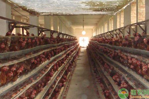鸡舍生石灰消毒方法