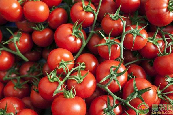 亚博-今日西红柿多少钱一斤?2019年最新产区西红柿价格行情