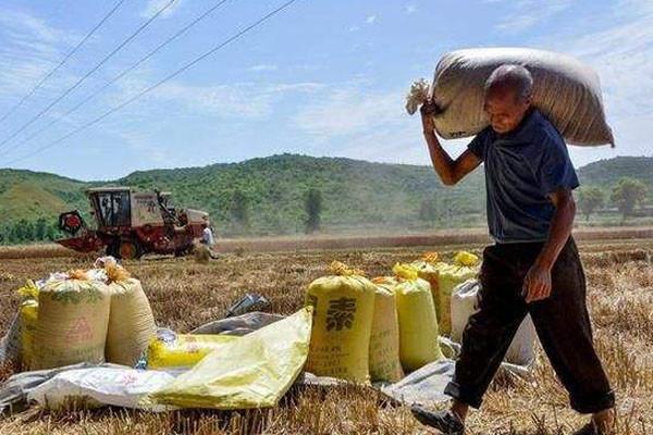 农民们注意了,这两种农业补贴开始发放了!