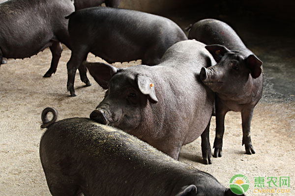2019年农业补贴对养殖户有哪些影响?