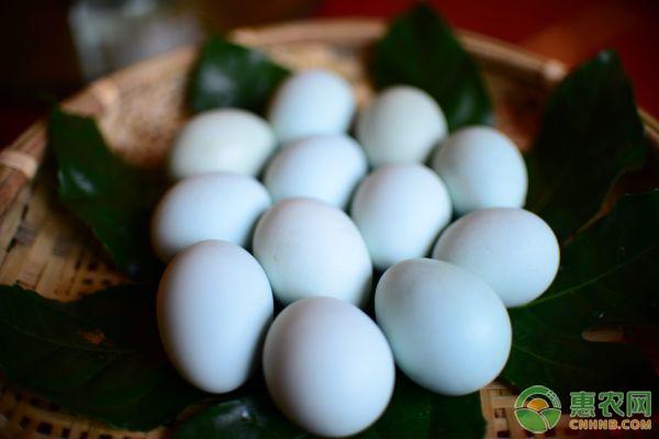 白皮鸡蛋和红皮鸡蛋哪种营养价值更大?