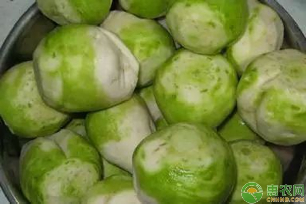 芥菜有哪些功效以及芥菜的食用方法
