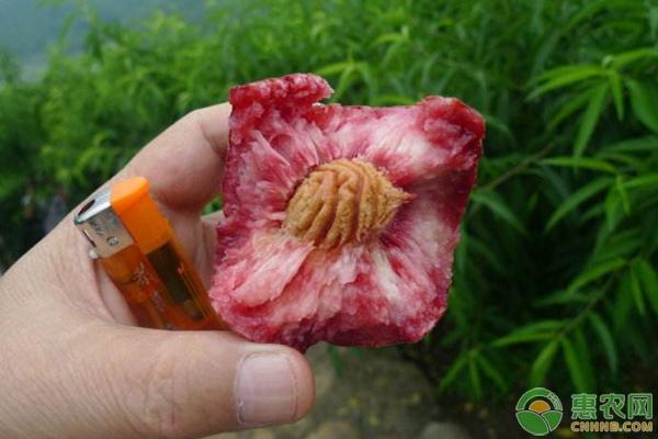 桃树种植果期的管理技术要点