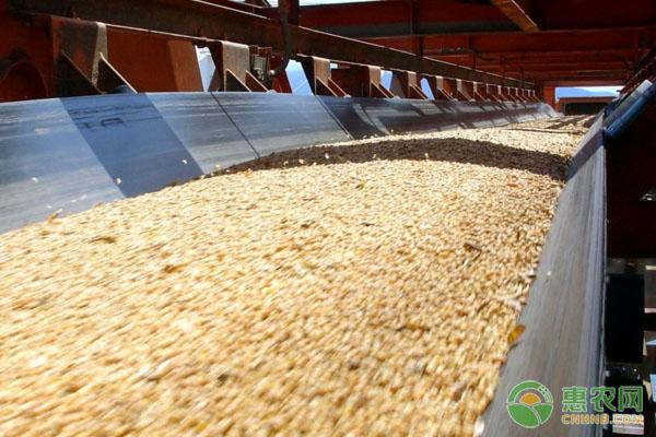 现在豆粕多少钱一吨?