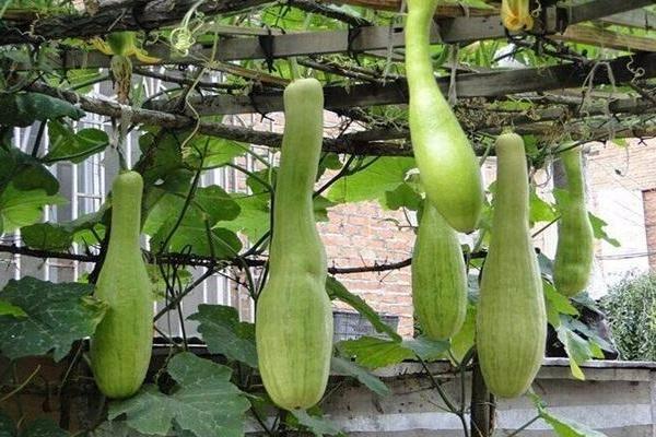 2019年哪些种植项目有前景?这十一种冷门农作物值得考虑!