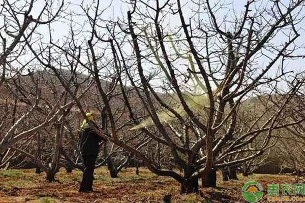 桃树打石硫合剂时间
