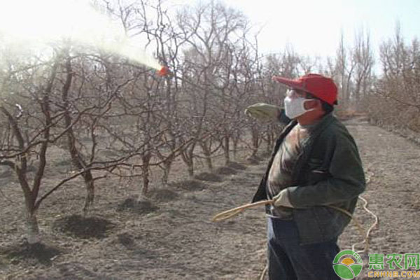 桃树打石硫合剂注意事项