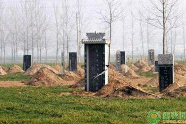 农村公益性墓地