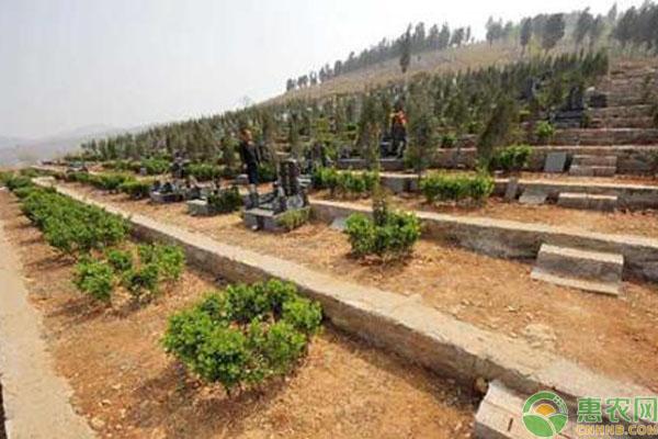 农村公益性墓地申请