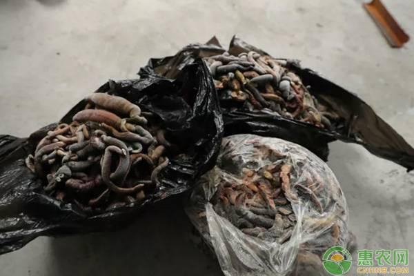 农民养殖水蛭,带动更多农户致富,他是怎么做到的?