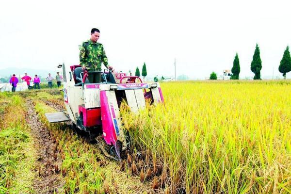 水稻直播好,还是插秧好?水稻直播、插秧种植优缺点