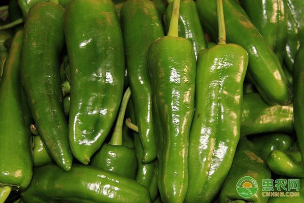 今日辣椒多少钱一斤?