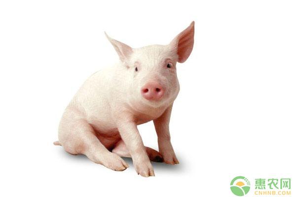 今日最高猪价是多少?2019年全国生猪价格行情分析