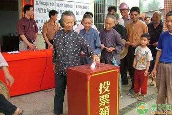 农村村干部选举人选