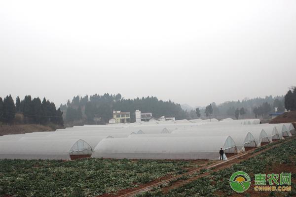 4月份蔬菜种植大全,农户必看!