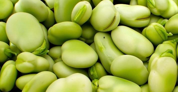 2019年蠶豆多少錢一斤?蠶豆有哪些功效和作用?