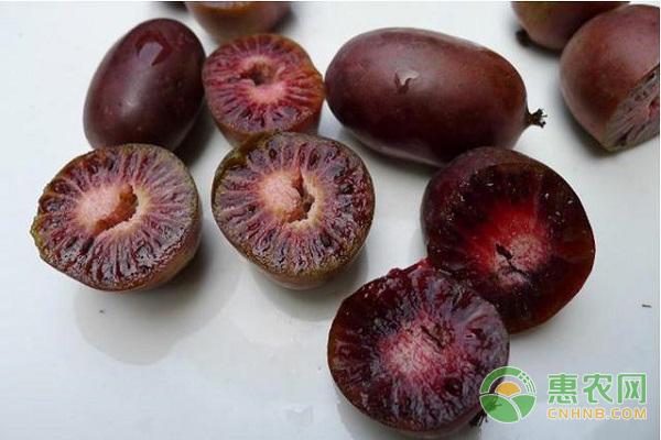 软枣猕猴桃营养价值