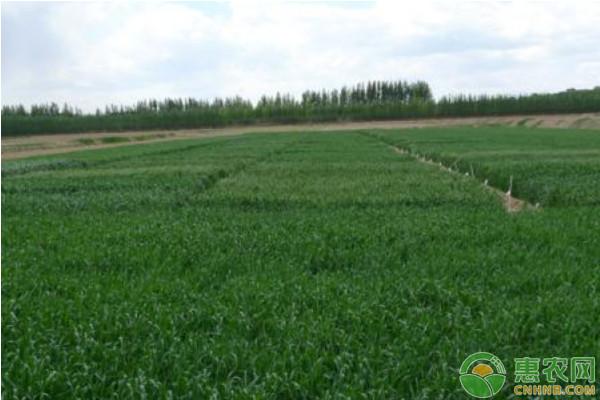 2019年有哪些绿色农业发展项目?具体补贴标准是多少?