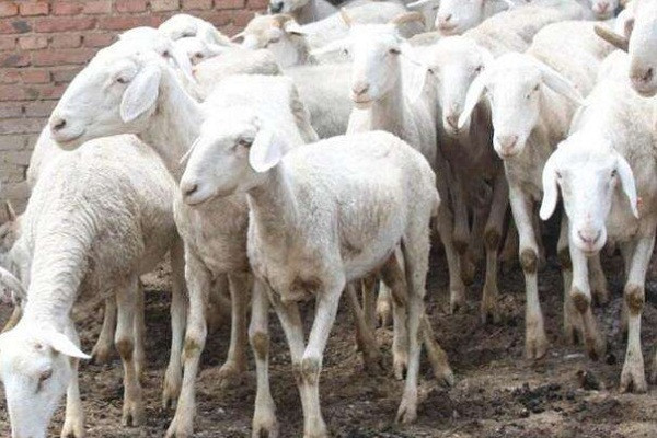 2019年农村有哪些前景不错的养殖项目?这几个可供参考