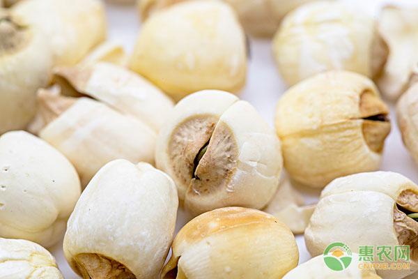 亚博-今日莲子多少钱一斤?都有哪些食疗功效及食用禁忌?