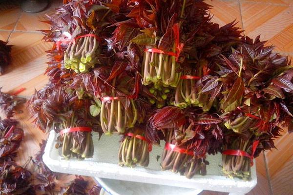 吃不完的香椿芽怎么保存?短期及长期保存方法建议收藏!