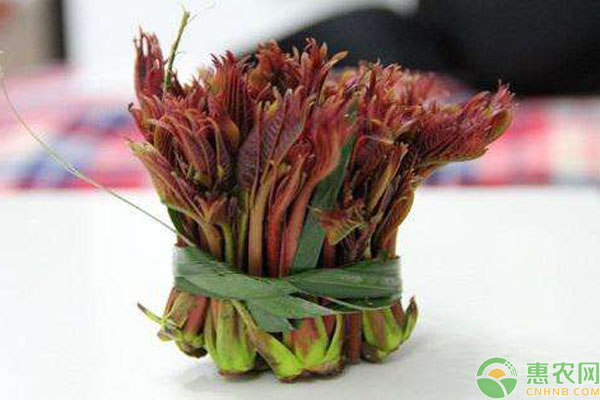 香椿芽保存方法