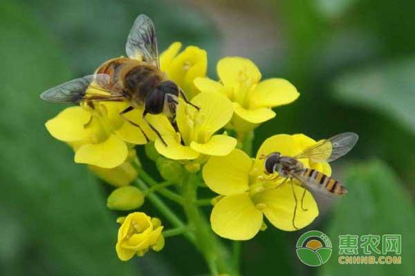 亚博-蜜蜂的市场价格怎样?养蜂赚钱难的原因是什么?