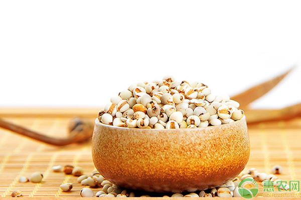 2019年薏米价格多少钱一斤?薏米的功效与作用禁忌及食用方法