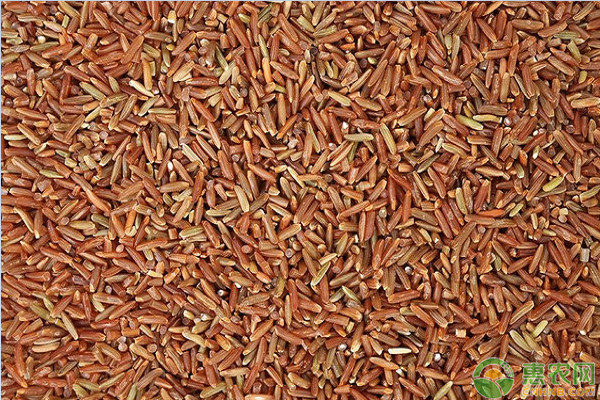 现在红大米价格多少钱一斤?红大米的功效与作用及食用方法