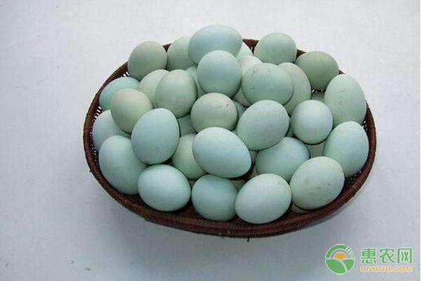乌鸡蛋的营养