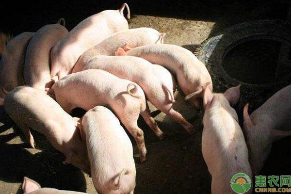 禁止剩菜剩饭喂猪