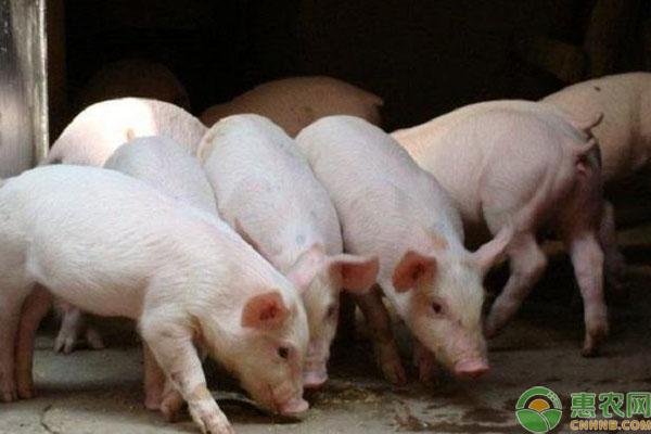 禁止剩菜剩饭喂猪原因