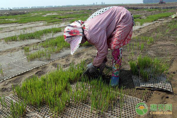 2019年重点强农惠农政策发布,都有哪些农业补贴可以领取?