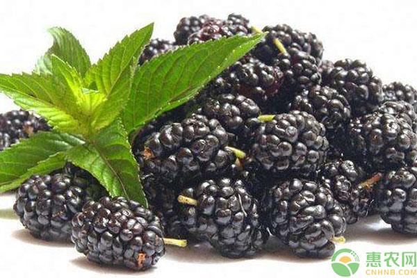 黑莓功效作用