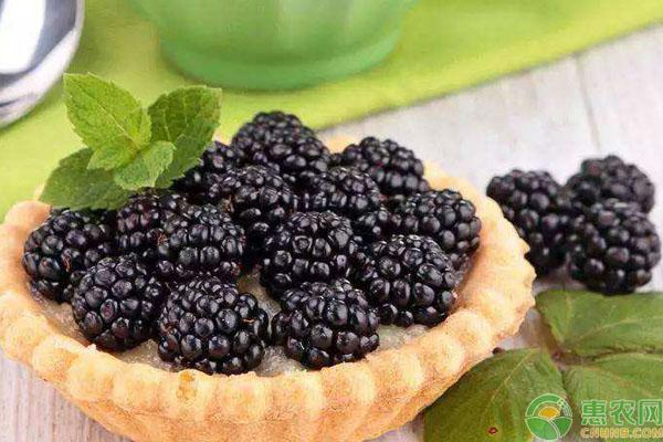 黑莓食用禁忌