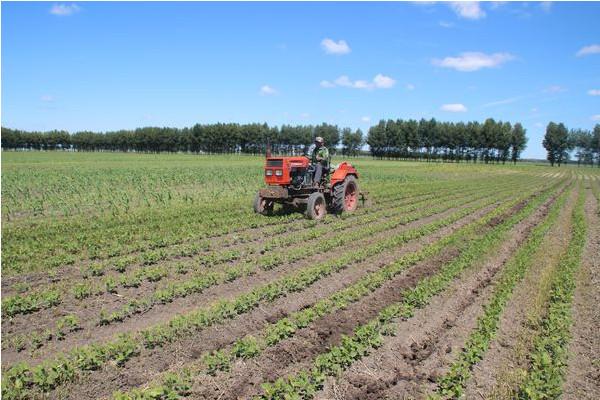 2019年农田建设有哪些任务?哪些地区将得到重点支持?