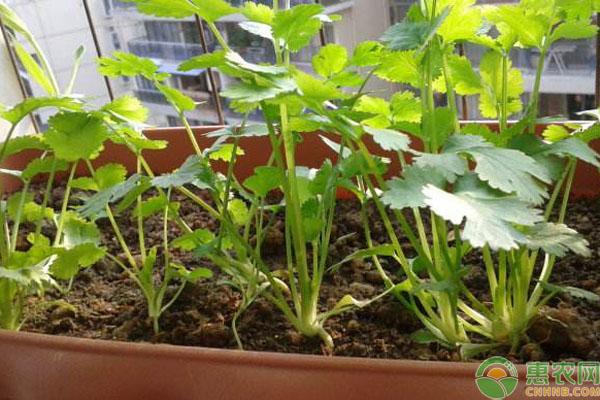 哪些蔬菜可夏天种