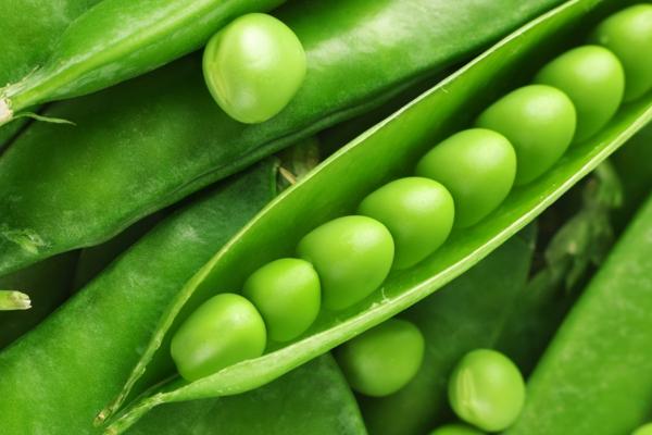 豌豆不能和什么一起吃?2019年豌豆价格最新行情汇总