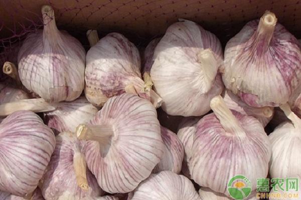 2019大蒜多少钱一斤?大蒜发芽能吃吗?大蒜的功效与作用