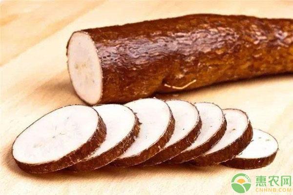 木薯食用注意事项