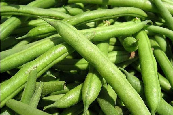 2019四季豆多少钱一斤?四季豆功效与作用禁忌