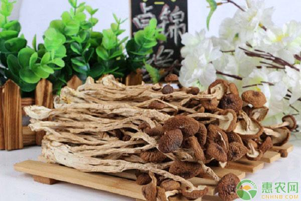 市场价格为8元一斤的茶树菇,农村姑娘创业种植,竟收益40万元